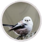 Round Beach Towel featuring the photograph Loong Tailed by Torbjorn Swenelius