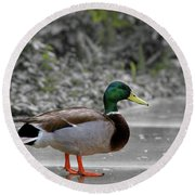 Round Beach Towel featuring the photograph Lost Duck by Mariola Bitner