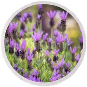 Round Beach Towel featuring the photograph Lots Of Lavender  by Saija Lehtonen