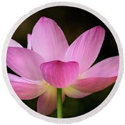 Lotus At The National Zoo Round Beach Towel