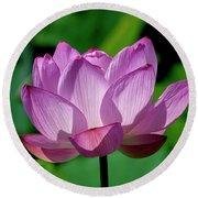 Lotus Beauty--buxom Beauty II Dl0090 Round Beach Towel