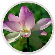 Lotus Bud--getting The Hang Of It Iv Dl0096 Round Beach Towel