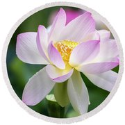 Round Beach Towel featuring the photograph Lotus by Edward Kreis