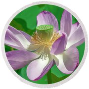 Lotus--fading II Dl0080 Round Beach Towel