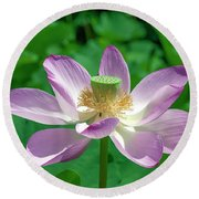 Lotus--fading IIi Dl0081 Round Beach Towel by Gerry Gantt
