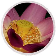 Round Beach Towel featuring the photograph Lotus Flower 6 by Buddy Scott