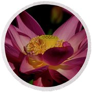 Round Beach Towel featuring the photograph Lotus Flower 7 by Buddy Scott