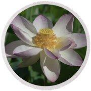 Lotus Flower In Bloom Round Beach Towel