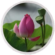 Lotus Flower In Pure Magenta Round Beach Towel