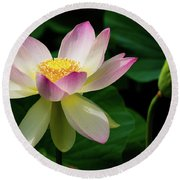Lotus Lily In Its Final Days Round Beach Towel