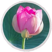 Lotus Pink Round Beach Towel