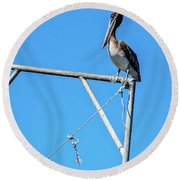 Louisiana's State Bird Round Beach Towel
