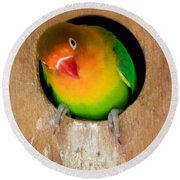 Round Beach Towel featuring the photograph Love Bird by Sean Griffin