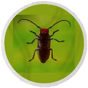 Love Bug Round Beach Towel