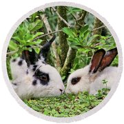 Love Bunnies In Costa Rica Round Beach Towel by Peggy Collins