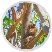 Round Beach Towel featuring the photograph Love My Tree, Yanchep National Park by Dave Catley