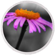 Round Beach Towel featuring the photograph Lovely Purple And Orange Coneflower Echinacea by Shelley Neff