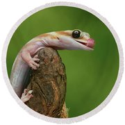 Round Beach Towel featuring the photograph Lovely Water - Velvet Gecko by Nikolyn McDonald