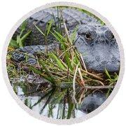 Loxahatchee Alligator-0639 Round Beach Towel
