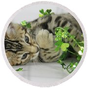 Lucky Kitten Round Beach Towel by Shoal Hollingsworth