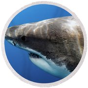 Lucy's Profile Round Beach Towel by Shane Linke