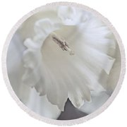 Round Beach Towel featuring the photograph Luminous Ivory Daffodil Flower by Jennie Marie Schell