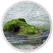 Round Beach Towel featuring the photograph Lumot Moss Seal by Paul Mashburn