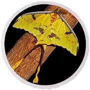 Round Beach Towel featuring the photograph Luna Moth by Judy Vincent