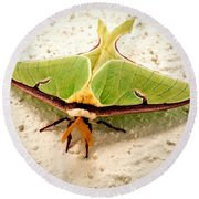 Luna Moth Round Beach Towel