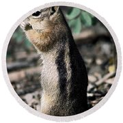 Round Beach Towel featuring the photograph Lunchtime For Ground Squirrel by Sally Weigand