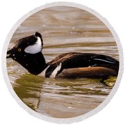 Lunchtime For The Hooded Merganser Round Beach Towel