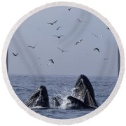 Lunge Feeding Humpback Whales Round Beach Towel
