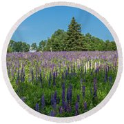 Lupine Field Round Beach Towel