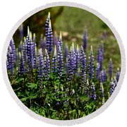 Lupine In Montana 2 Round Beach Towel