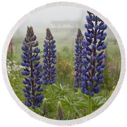 Lupine In The Fog Round Beach Towel