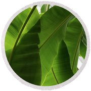 Luscious Tropical Greens - Huge Leaves Patterns - Vertical View Downward Left Round Beach Towel