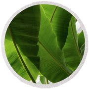 Luscious Tropical Greens - Huge Leaves Patterns - Vertical View Upwards Left Round Beach Towel