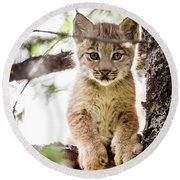 Lynx Kitten In Tree Round Beach Towel