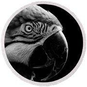 Macaw Parrot Portrait Black And White Round Beach Towel