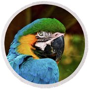 Round Beach Towel featuring the photograph Macaw Portrait by Kathy Baccari