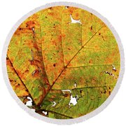 Macro Autum Round Beach Towel