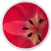 Macro Beauty Tulip Round Beach Towel