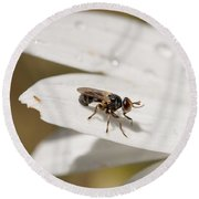 Round Beach Towel featuring the photograph Macro Bugs by Nikki McInnes