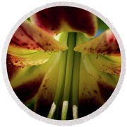 Round Beach Towel featuring the photograph Macro Flower by Jay Stockhaus
