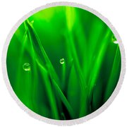 Macro Image Of Fresh Green Grass Round Beach Towel