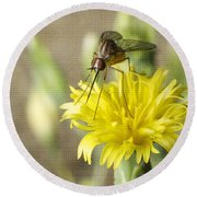 Macro Photography Of A Mosquito Over A Lettuce Flower Round Beach Towel by Claudia Ellis