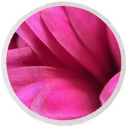 Macro Pink Chrysanthemum Round Beach Towel