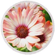 Macro Pink Cinnamon Tradewind Flower In The Garden Round Beach Towel
