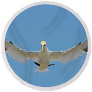 Round Beach Towel featuring the photograph Maestro by Tony Beck