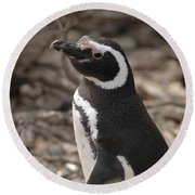 Magellanic Penguin No. 1 Round Beach Towel by Sandy Taylor
